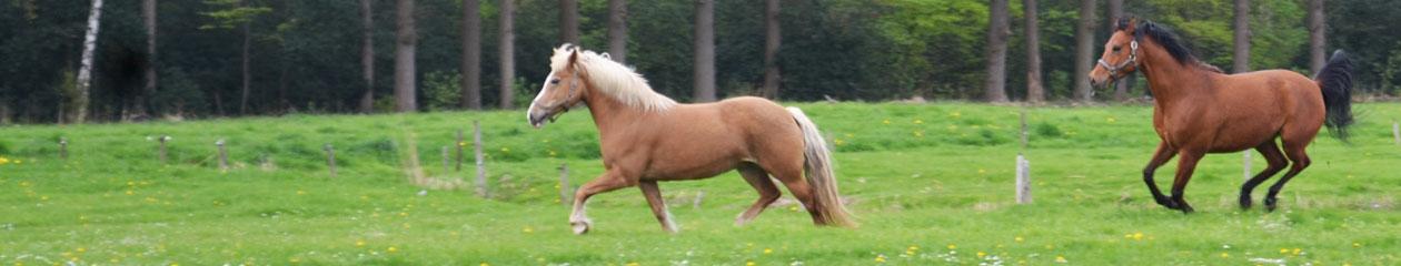 Alles over Paard en Ruiter