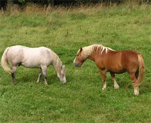 Twee-Paarden-300
