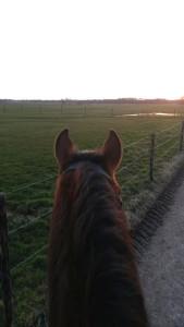 Gedrag van Paarden en Ruiter Advies Tips en Uitleg