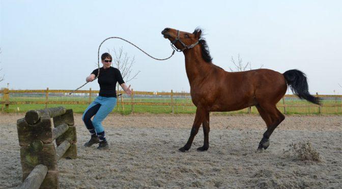 Waarom Schrikt Je Paard? Uitleg Advies Tips Informatie