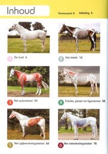 Anatomie-Sportpaard-inhoudsopgave1-Gillian Higgins