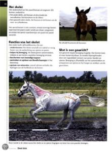 Hoe-beweegt-uw-paard-pagina Gillan Higgins