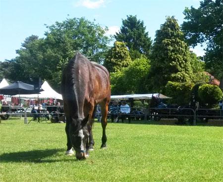 Dag van het Oudere Paard Foto
