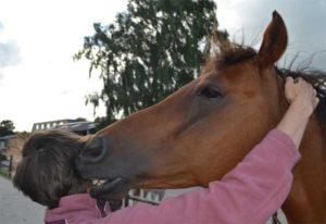 Vertrouwd omgaan met paarden