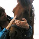 Workshop Angst voor Paarden Overwinnen