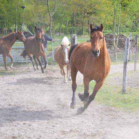 Goed Zorgen voor Je Paard