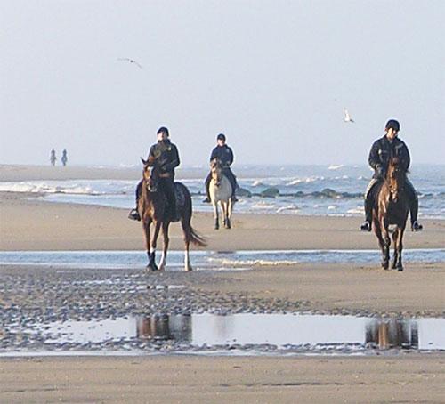 Paardrijden op Texel
