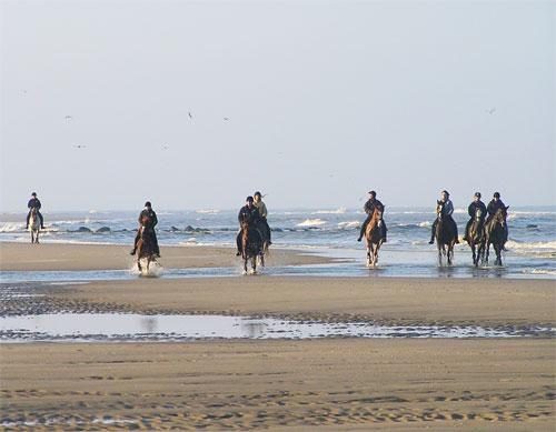 Paardrijden op het Strand Mogelijkheden