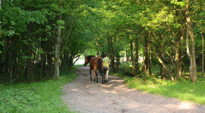 Paardrijles Hilversum en 't Gooi