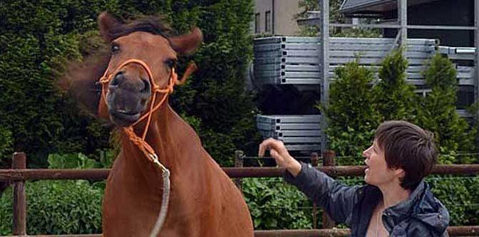 Paardenfilmpjes