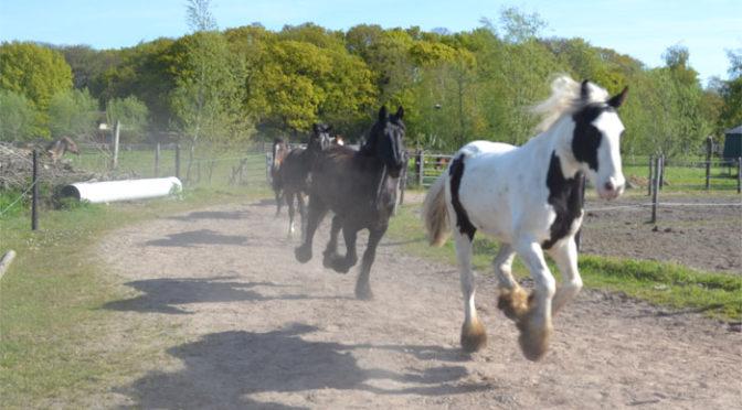 Gezond Paard. Hoe houd je je paard gezond?