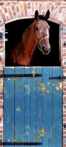 Paardenkamer Tips Ideeën Inrichten Fotobehang Stalpaard