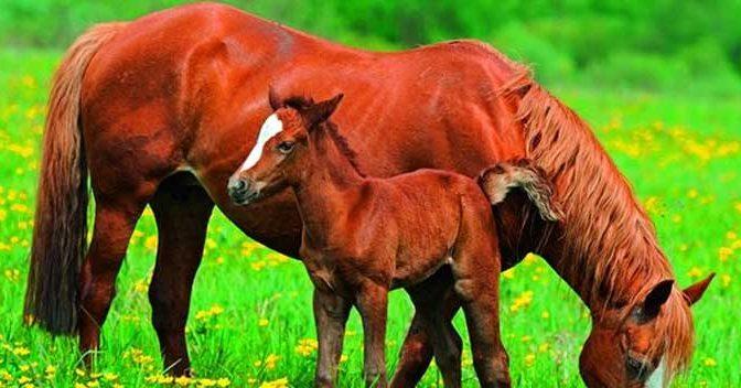 Paarden Behang Tips Aanbiedingen Voorbeelden Paardenbehang