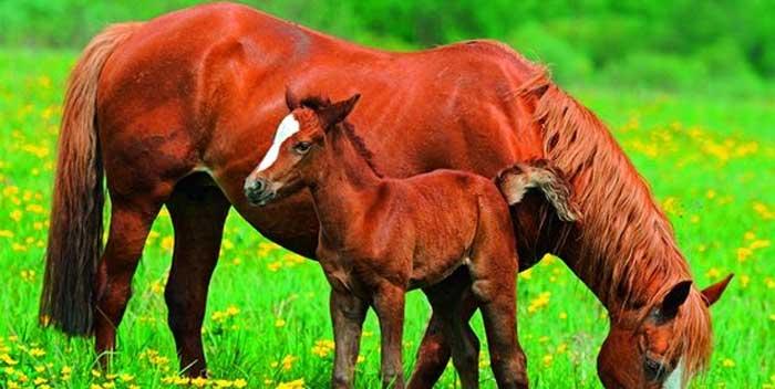 Paarden Behang Posterbehang.Paarden Behang Tips Aanbiedingen Voorbeelden Paardenbehang