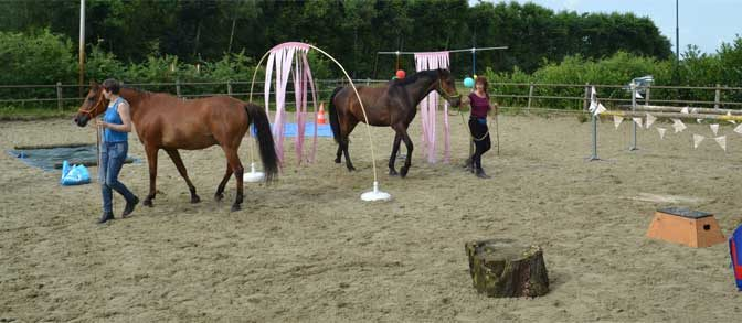 workshops schriktraining paard