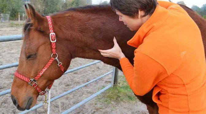 Paardenmassage Utrecht Prijs Informatie