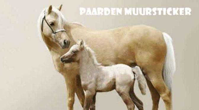 Paarden Muursticker Paard en Pony Tips en Aanbiedingen