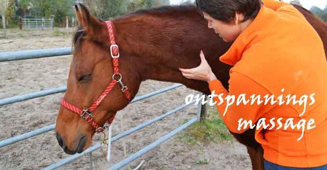 Ontspanningsmassage Paarden