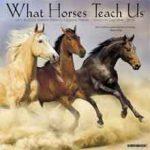 Paarden Kalender 2018 What Will Horses Teach Us