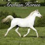 Paarden Kalenders 2018 Arabian Horses Kalender