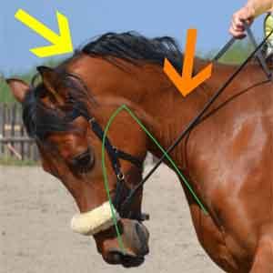Valse Knik Paardrijden Voorkomen