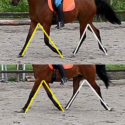 Paard Kreupelheid Herkennen Tips Uitleg
