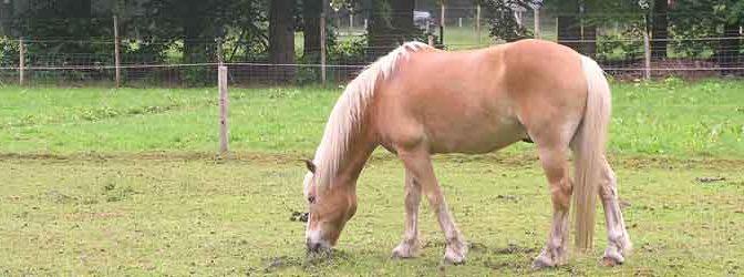 Paard Pijn Symptomen Herkennen Pijn en Ongemak