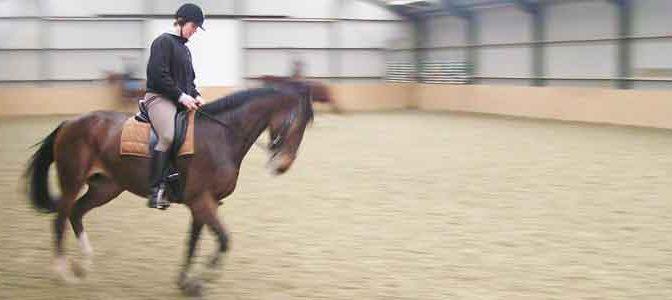 Paard is Boos met Opzadelen en Aansingelen