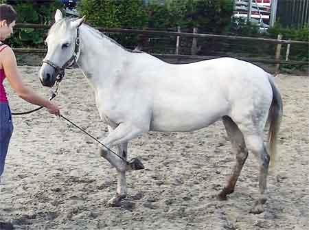 Voetje Geven Paard Leren