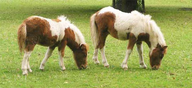 Verschil tussen bouw en bespiering van een paard