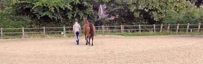 Adem Workshop voor Ruiter en Paard