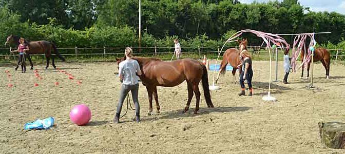 Workshops Cursussen Trainingen Paarden en Paardrijden