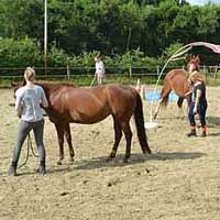Paardenworkshops