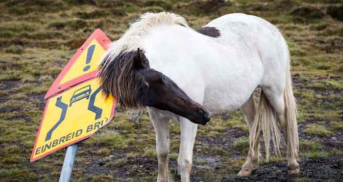 Zomereczeem Voorkomen bij Paard en Pony