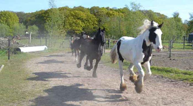 Paard Verhuizen Advies en Tips voor een Goede Verhuizing