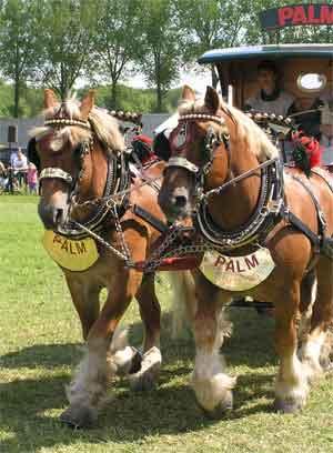 Paarden Soorten en Gebruik - Tuigpaard