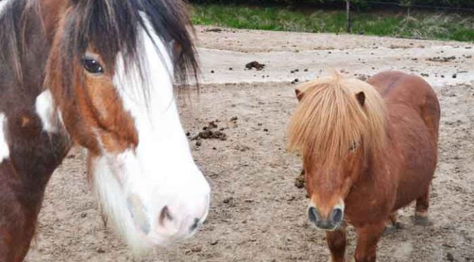 Paard Karakter Soorten Advies en Informatie